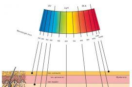 Infraraudonųjų spindulių bangų ilgių poveikis odai
